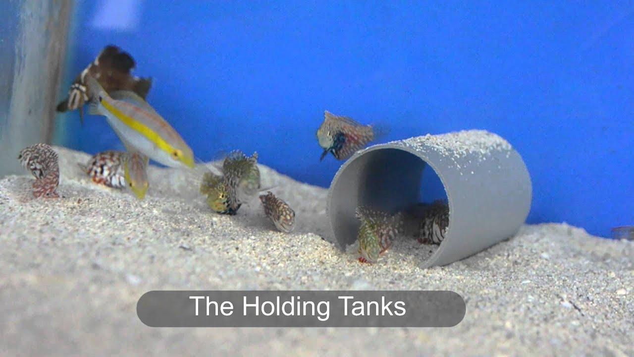 how to feed marine fish
