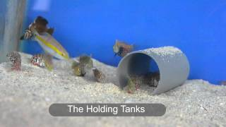 Ornamental Marine Aquarium Fish of Mauritius