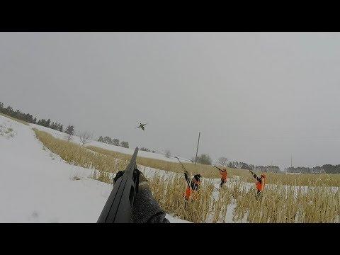 INSANE Pheasant Hunting In Minnesota