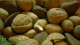 Které ořechy bojují s rakovinou nejlépe?