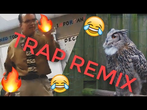 I Don't Give A Hoot [TRAP REMIX] | by Asher Postman