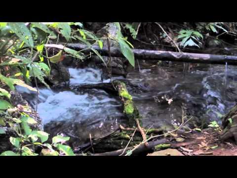 sons-da-natureza---Água-corrente-(1-hora)---para-relaxamento,-meditação,-dormir-ou-estudar