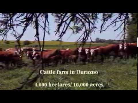 cattle ranch Uruguay