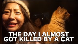 ALMOST GOT KILLED BY A CAT