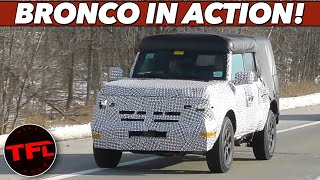 Breaking News: The New Bronco Spied on the Road - Here's How it Compares To The Wrangler & Defender!