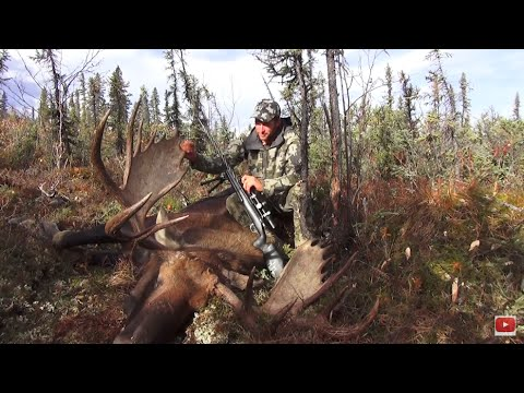 Alaska Moose Hunt 5 YARD SHOT!!!! - Stuck N the Rut 74