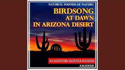 Birdsong at Dawn in Arizona Desert: Natural Sounds of Nature