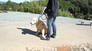 静岡県浜松市で犬のしつけ教室をしています、ペットのブリーダーワンブ...