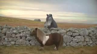 Three Dancing Pony - Advert