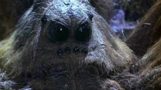 Top 5 Giant Movie Spiders | TheCrypticCinema