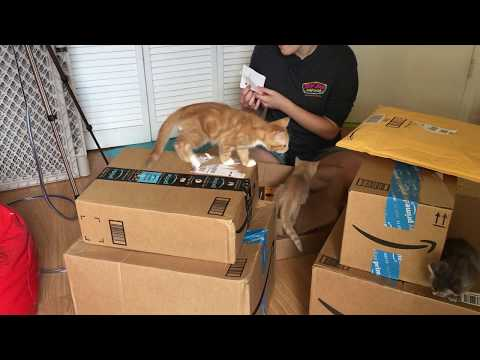 Amazon Kitty Wishes Granted! Thank You SO Much!!