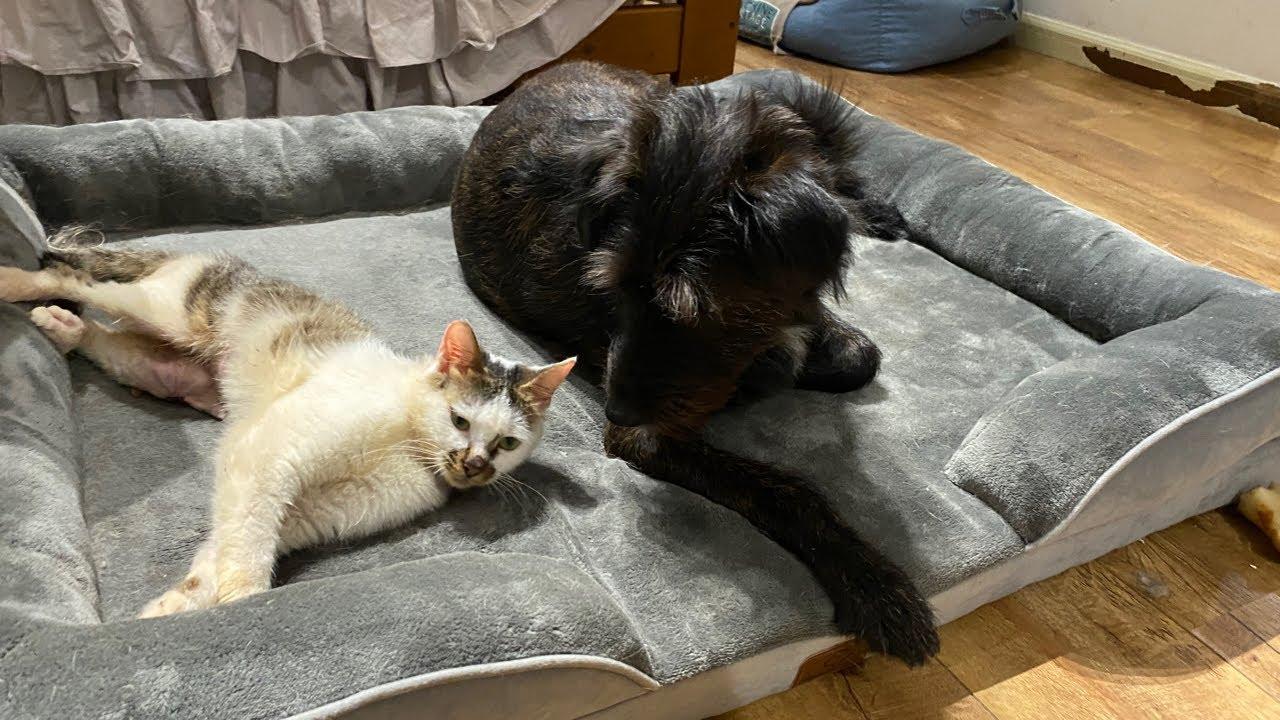 貓咪狗狗一起養能和諧相處嗎?我看行!| 李喜貓