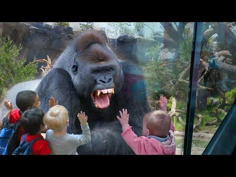 Animales salvajes en el Zoo Vs Niños. Videos de animales peligrosos y bonitos,