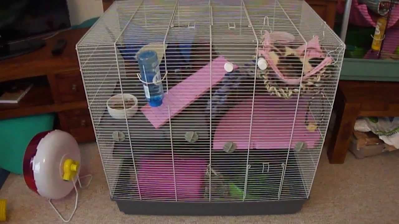 I Would Like To Keep Rats Part 2 Choosing A Rat Cage
