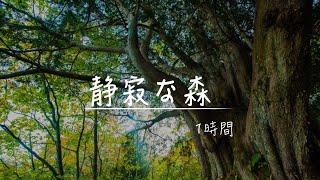 【立体音響・睡眠用BGM】静寂な森で眠る!「鳥のさえずりと川の音」作業 睡眠 読書 瞑想 ヨガ 勉強用BGM thumbnail