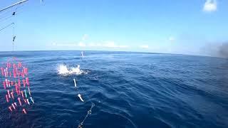 2018 Offshore World Championship | Torneio Marlin do Rio de Janeiro | Pacific Sailfish