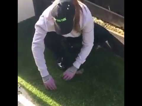 How to remove dog urine odour from artificial grass