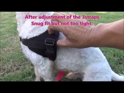 Chest harness fitting for Huggiecart dog wheelchair