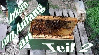 Imkern von Anfang an - Teil 2 - Der erste Ableger - Das erste Bienenvolk