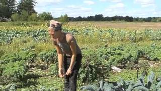 Harvesting the Goodness: Kale