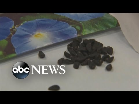 Teens Eating Flower Seeds to Get High, Police Say