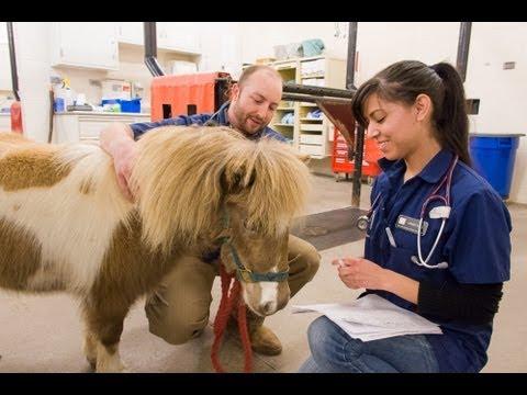 Horses Visiting Nursing Homes