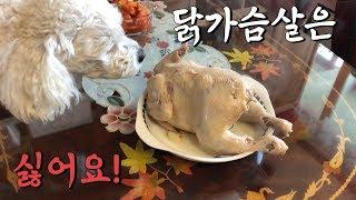 강아지의 삼계탕 먹방(닭가슴살 안 먹는 강아지)-마로와규니-