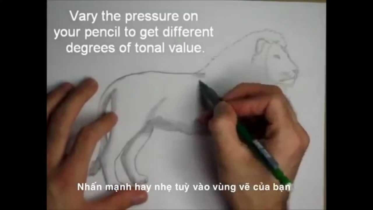 Cách vẽ sư tử | Cách vẽ sư tử bằng bút chì trong 10 phút