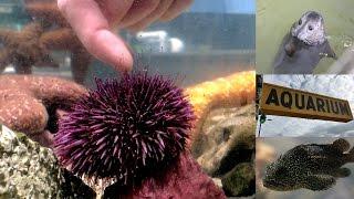 Visiting the Seaside Aquarium in Oregon in 4k