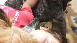 Видео с собаками