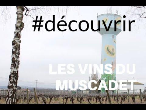 à la découverte des vins du Muscadet