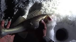 Судак на Жерлицы Рыбалка на водохранилище в экстремальную погоду Один на льду