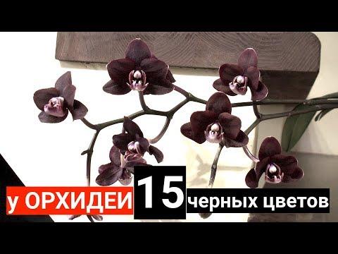 у ОРХИДЕИ 15 черных цветов