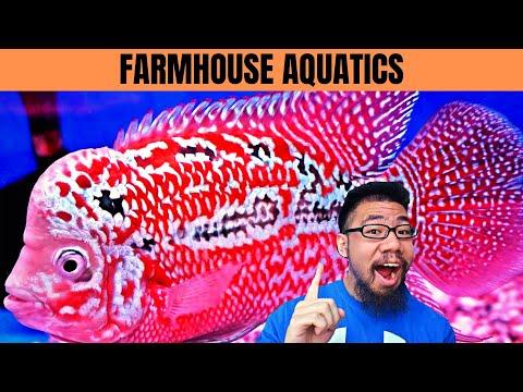 CRAZY FLOWERHORN STORE TOUR!!! | Flowerhorn Care Tips | Farmhouse Aquatics