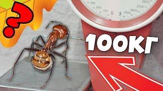 Фото Сколько весит муравей Эксперимент