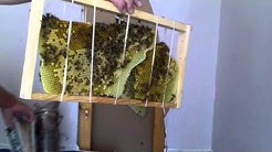 Independence Day Hive Removal