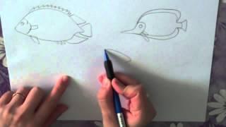 как нарисовать рыбку видео