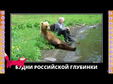 Весёлое видео 2019. Демотиваторы про животных. Приколы с животными 2019.Demotivators.