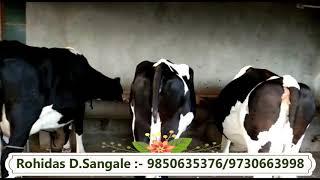 Dairy Farm basic farm managment part 4 Details Rohidas Sangale  Marathi