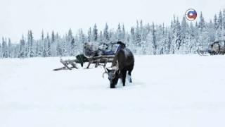 Неделя Региона. Ямало-Ненецкий автономный округ  | О канале | Телеканал