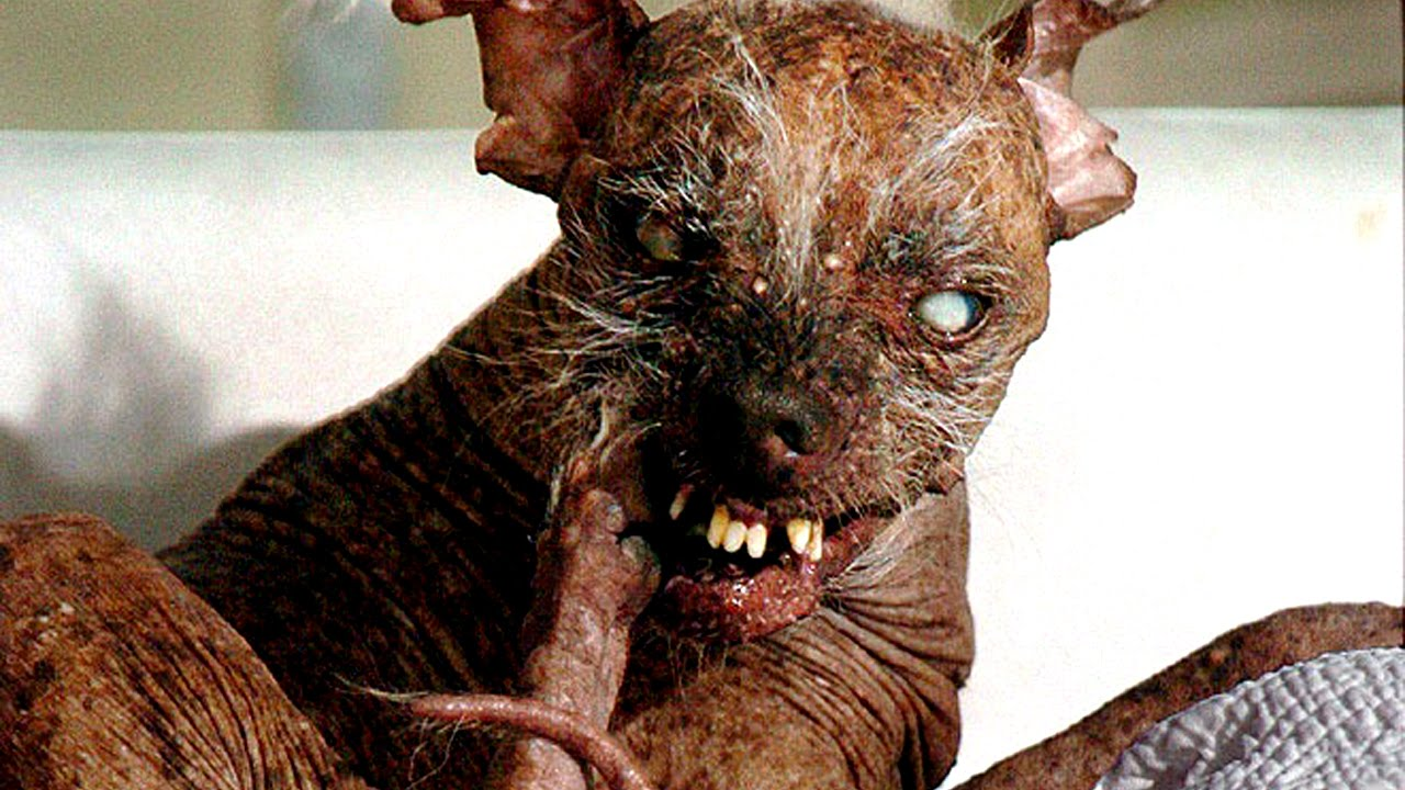 15 World's Ugliest Dogs or Cutest Dogs - YouTube