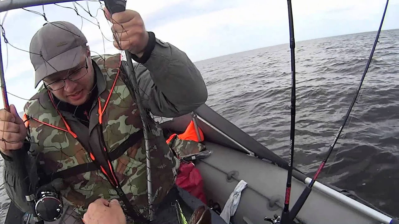 судак на ладожском озере на что ловить
