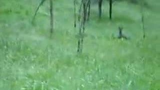 Kängurus in Neuseeland?!