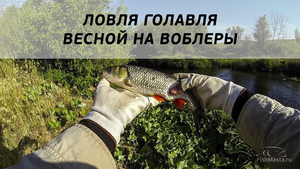 Ловля голавля весной воблерами на р Чир [FishMasta.ru]