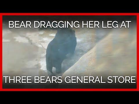 Bear Dragging Her Leg at Three Bears General Store
