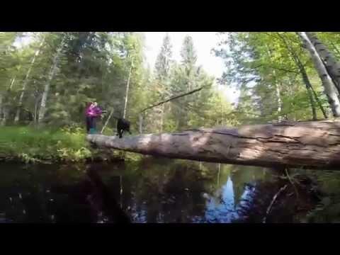 Путешествие к водопаду  на реке Нижний ИГ (Архангельская область, Плесецкий район)