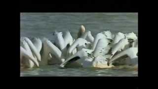 Ptačí svět - Le Peuple Migrateur - Winged Migration