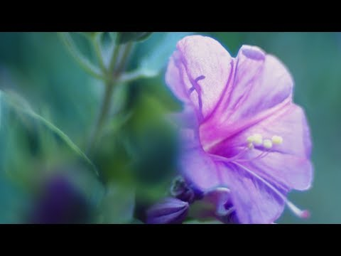 "Peaceful Music, Relaxing Music, Instrumental Music, ""Garden of Light"" by Tim Janis"