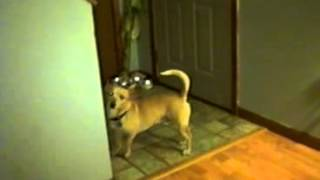 Dogs playing tuggy