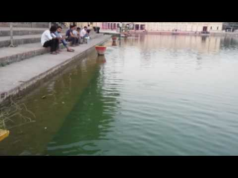 Beautiful fish in Gangasagar,Janakpurdham